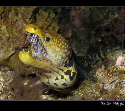 &quot;Flash me again and I'll bite you&quot;................Canon G... by Brian Mayes 